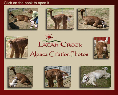 Alpaca Criation Photo Album