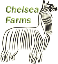 Chelsea Farms Alpacas, breeding elite suri alpacas since 1995.